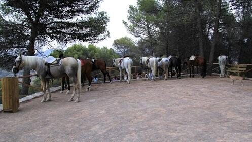 1 o 2 Noches con alojamiento + paseo a caballo