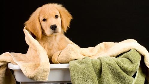 Sesión completa de belleza canina desde 14,90€