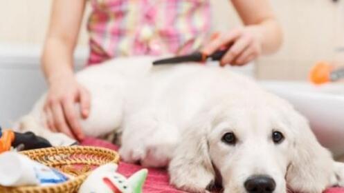 Baño y Peinado para perro desde 13,90€